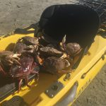 Kayak Fishing for Dungeness Crabs in Silicon Valley